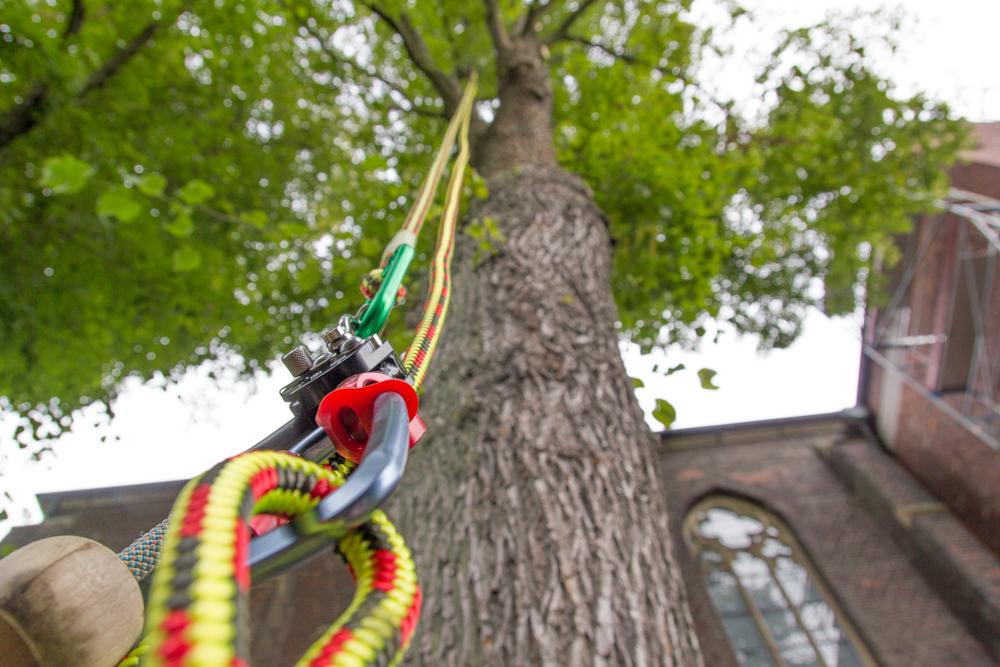 Baumpflege  Baumpflege | Andreas Hanik - Garten- und Landschaftsbau
