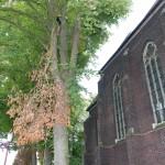 Sturmschäden dürfen die Besucher des Kirchengeländes in Steele nicht gefährden.