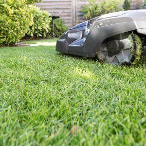 Bild Mähroboter auf Rasen in einem Garten