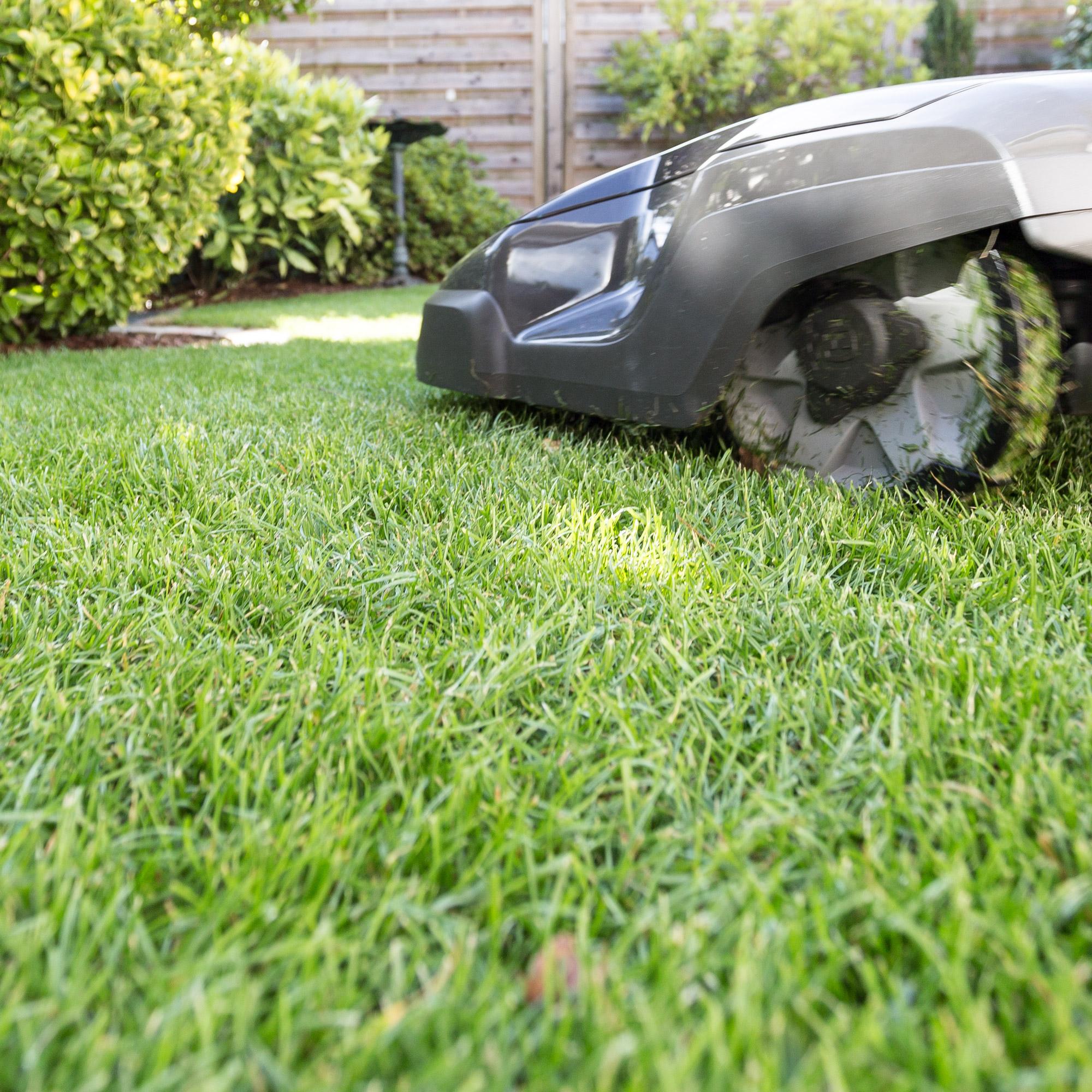Rasen richtig pflegen: sattes Grün und möglichst unkrautfrei